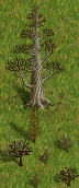 dead-great-tree2-drygrass.png